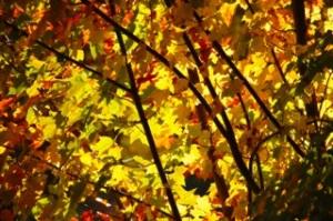 foliage-712048_1920